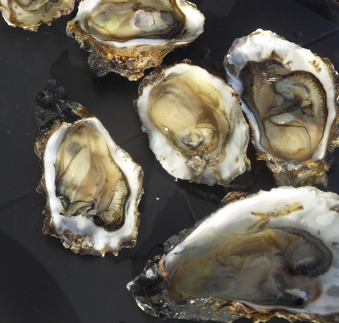 oesters Terschelling